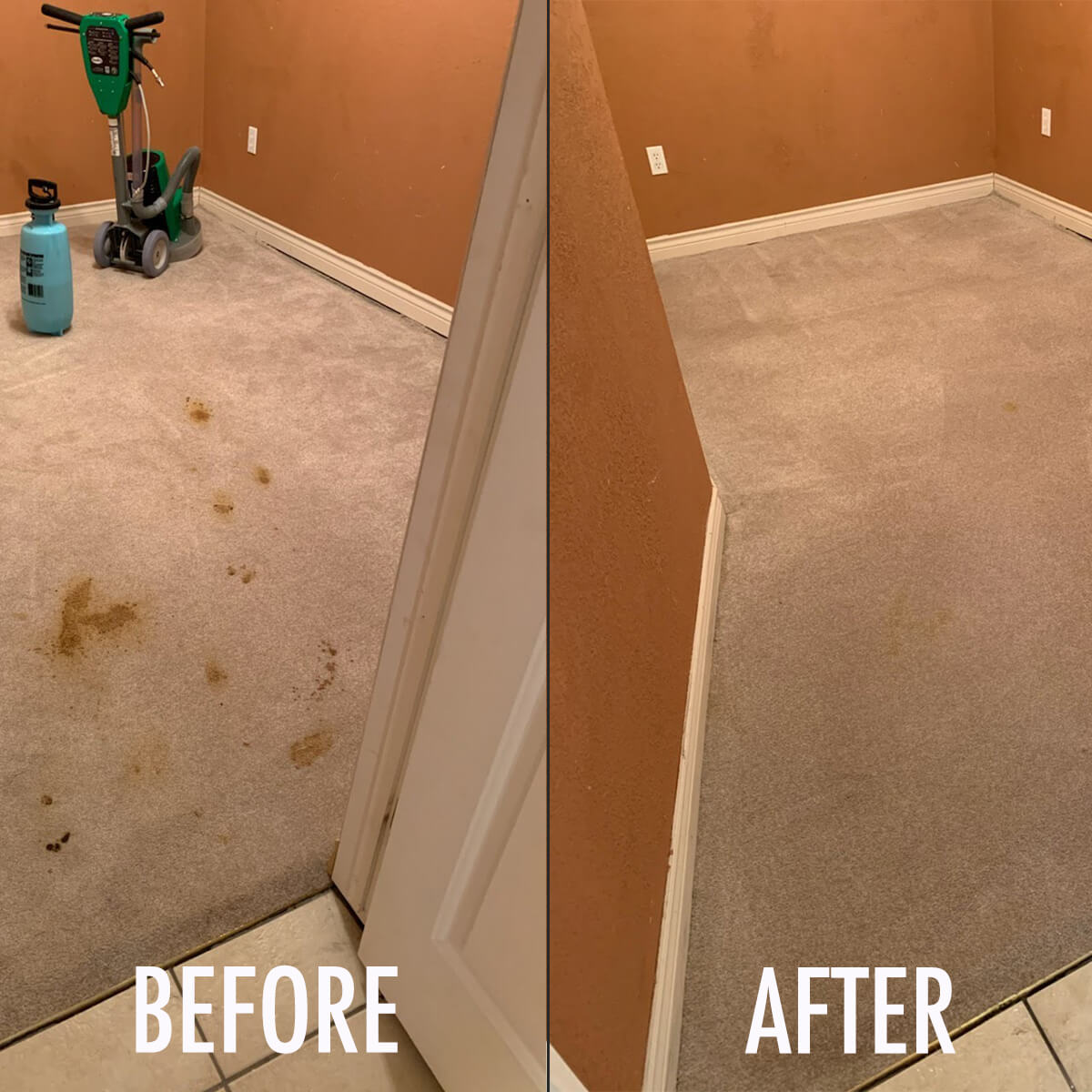 pet poop stain removal before and after