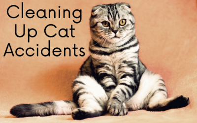 Treating Cat Accidents In Your Home