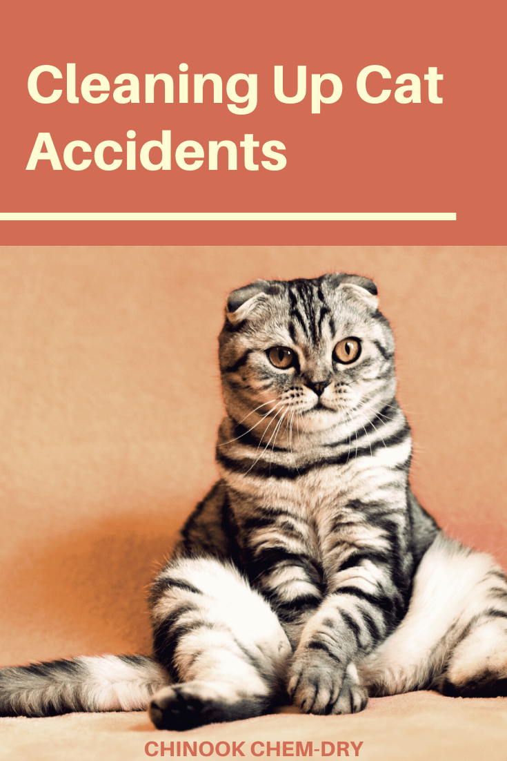 cat pee removal from carpets