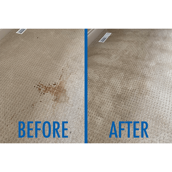 We removed a nasty coffee stain from this carpet