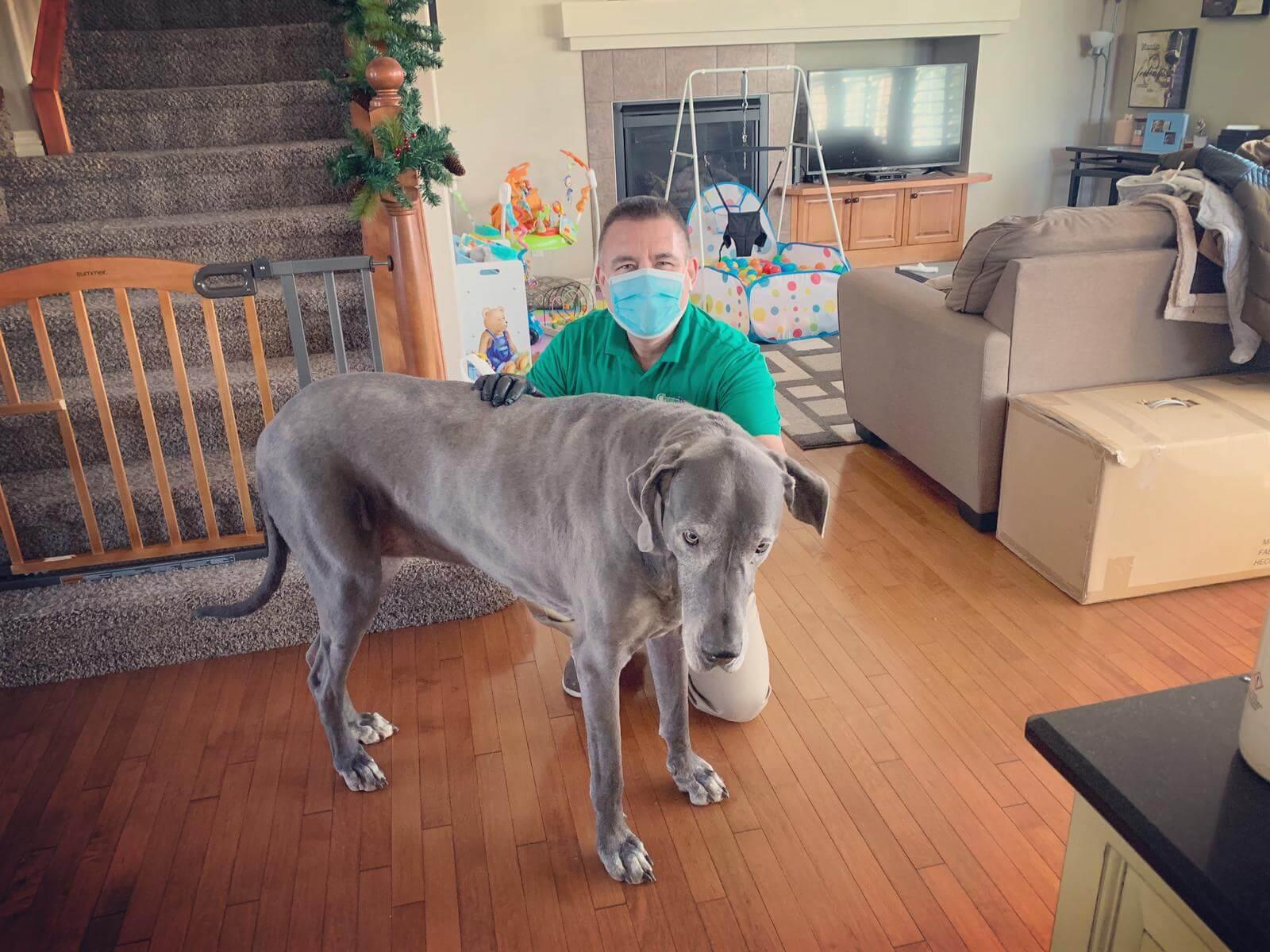 carpet cleaners & Pet Stain removal expert in calgary, ab