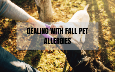 Dealing with Fall Pet Allergies